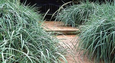 Veddw House Garden - Robin White - Image 1