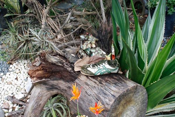 training shoe planter, Hort Park, copyright Jonathon Fothergil