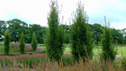 Sussex Prairie Gardens 5 copyright Darryl Moore