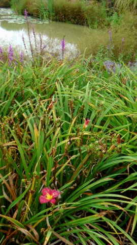 Sussex Prairie garden 6 copyright Darryl Moore