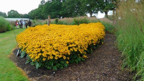 Sussex Prairie Garden 7 copyright Darryl Moore