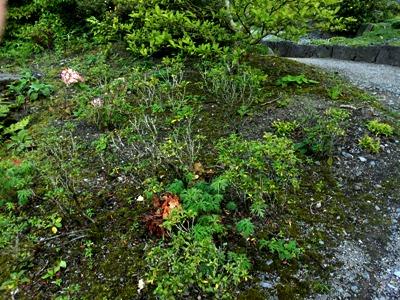 Alpinum  © Anne Wareham Thinkingardens, think gardens, think in gardens, Aberglasney, Aberglasney Garden, South Wales Garden, Welsh garden, Anne Wareham, Veddw, garden review