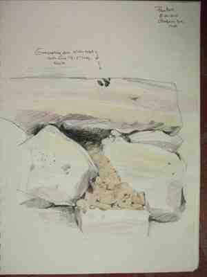 Groundhog hole drawing copyright Pamela Ruch, for thinkingardens
