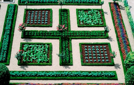 The potager at Villandry, Loire, France.  June. copyright Charles Hawes for thinkingardens