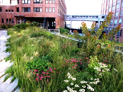 High Line, New York, Credit Piet Oudolf Copyright Noel Kingsbury on thinkingardens