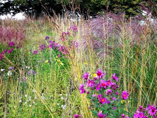 National Botanic Garden of Wales copyright Tristan Gregory