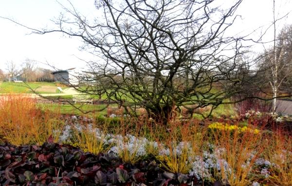 Copyright Julianne Porter Harlow Carr Winter Walk Mar14 for thinkingardens
