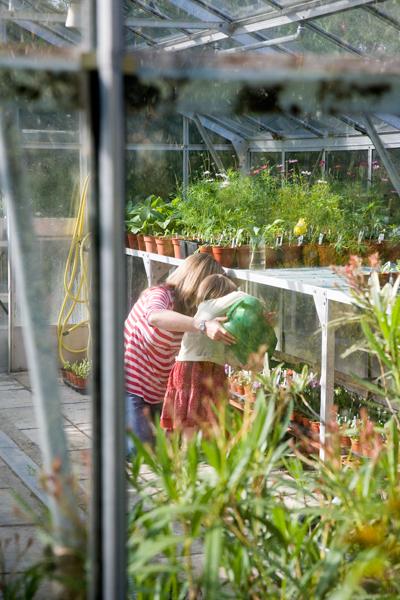 TGwatering-greenhouse