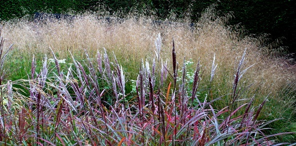 Grasses at Veddw, s copyright Anne Wareham