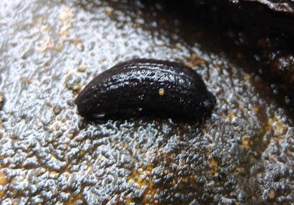 Slug Copyright Anne Wareham at Veddw 001 s