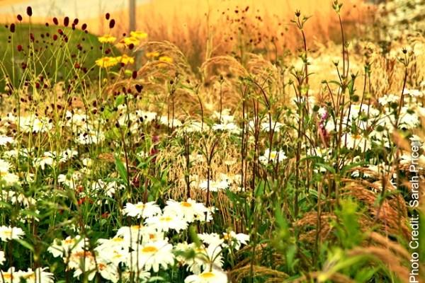 A Sarah Price designed planting emulates a natural meadow. Copyright Sarah Price