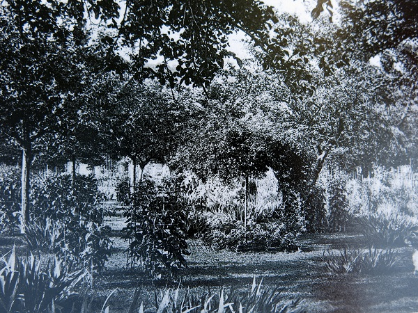 monet-black-and-white-s-img_0100