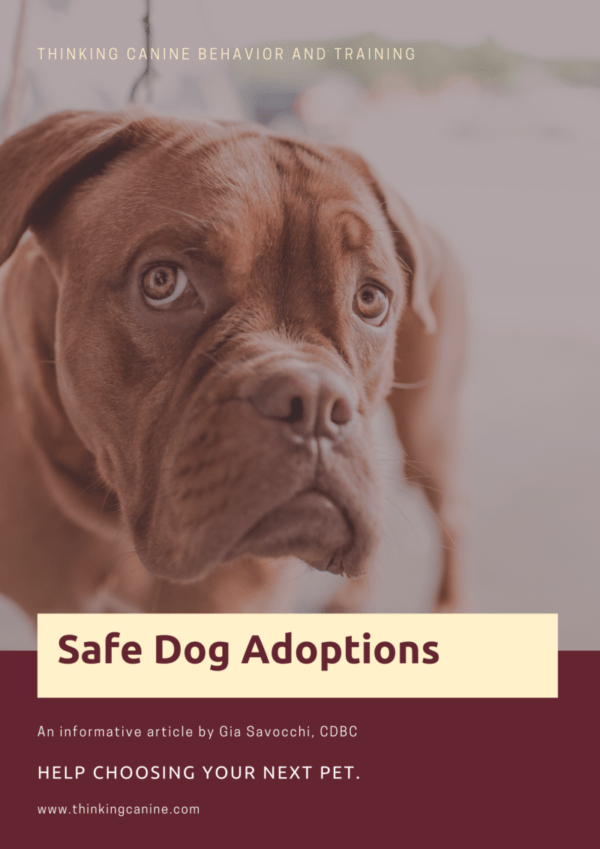 Safe Dog Adoptions: Choosing A Shelter Pet