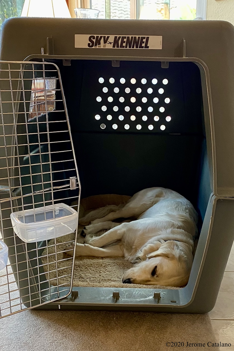 Maggie asleep in her crate,