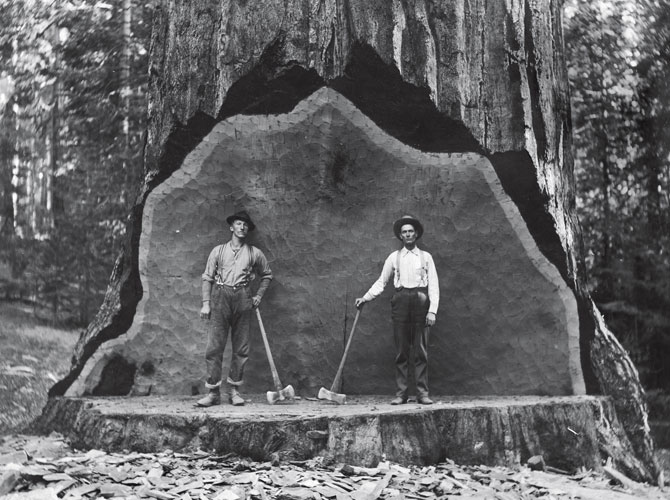 Giant sequoia in Converse Basin used as backdrop for photos (National Park Service)