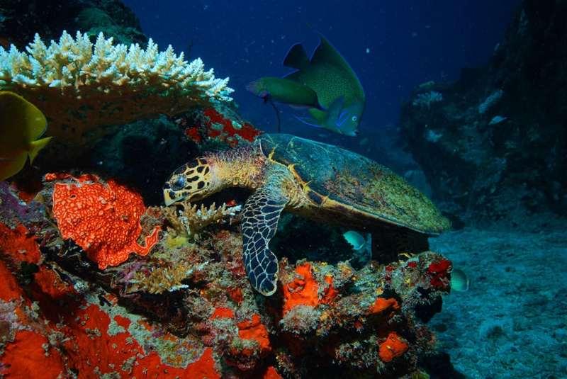 Seychelles - sea turtle