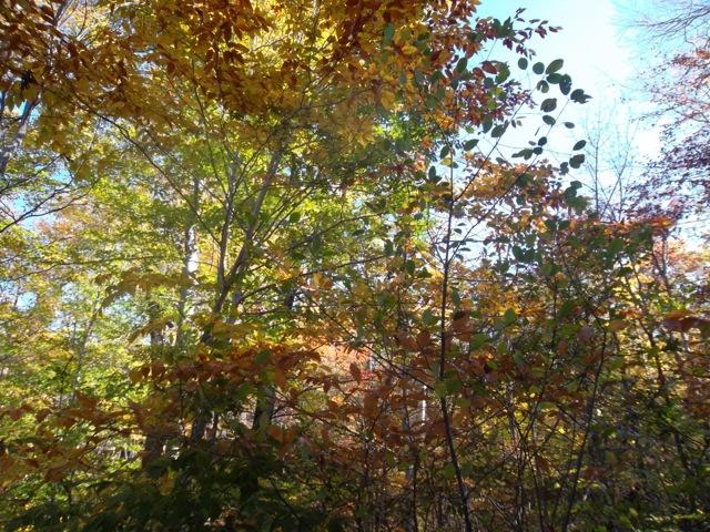 Fall Colors, Adirondack Park - New York, USA