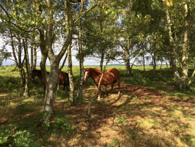 New Forest – Burley, Inghilterra