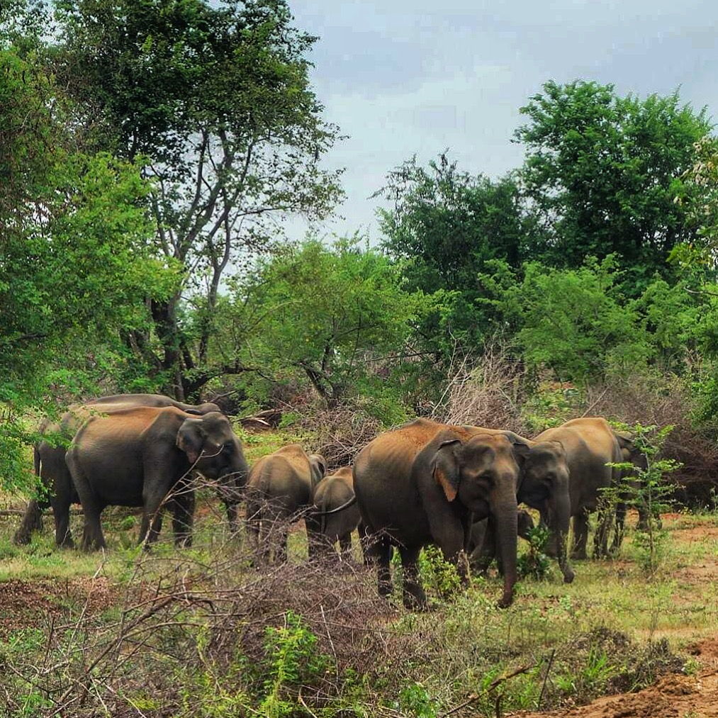 Wildlife Safari with Kids: Uda Walawe National Park, Sri Lanka