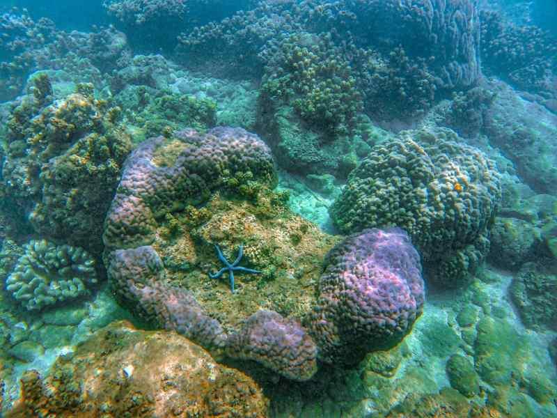 Cham Islands with Children snorkeling