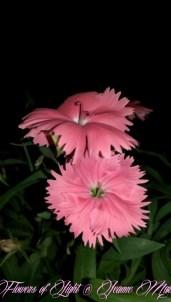Flowers of Light~Jeanne Marie (10 of 28)