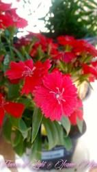 Flowers of Light~Jeanne Marie (5 of 28)