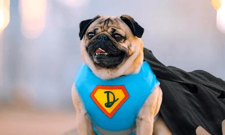 Doug the Pug: The Dog, the Myth, The Internet Legend