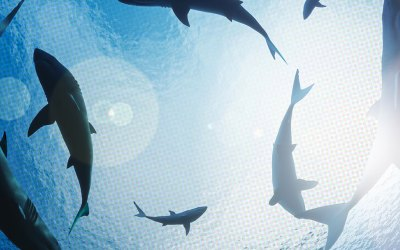 Shark Week Turns 32 with a Slew of Sponsors