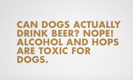 Busch Beer Unleashes a Brew for Dogs
