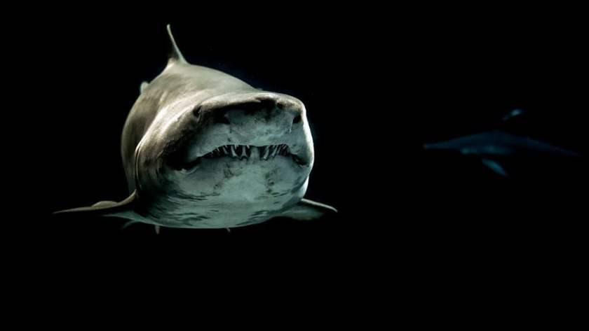 animals aquatic black and white 726478_result