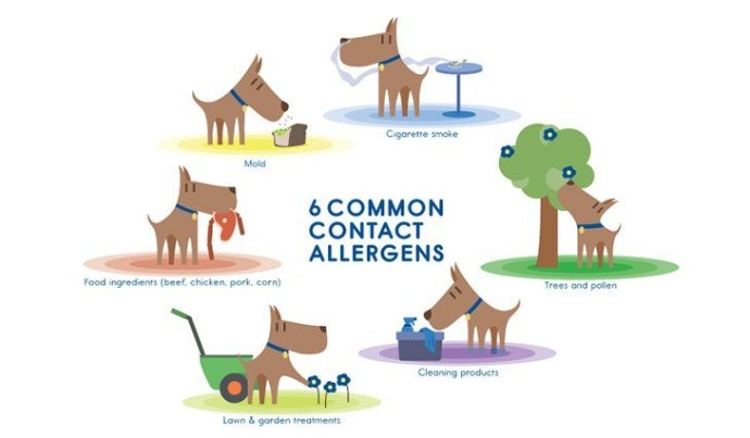 case study about contact allergents