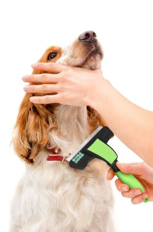 guide how to brush your dog