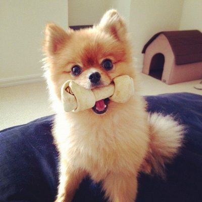 rawhide for dog