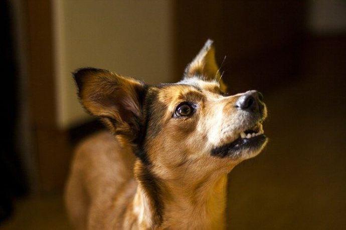 sensing precautions will happen to your dog