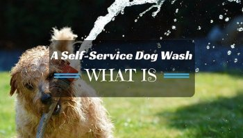 What is a self service dog washgfit730382ssl1resize350200 what is a self service dog wash what you should know solutioingenieria Gallery
