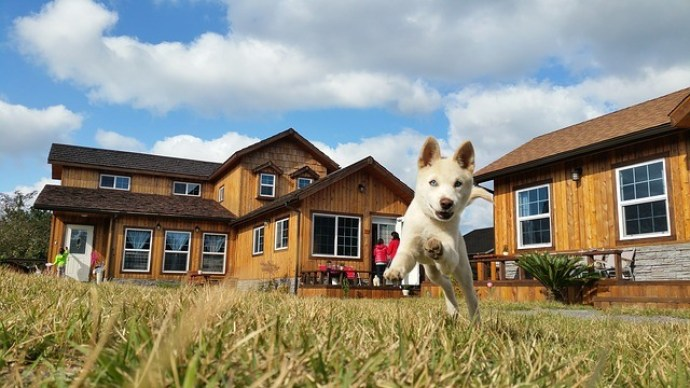 what you need to know about puppy apartment