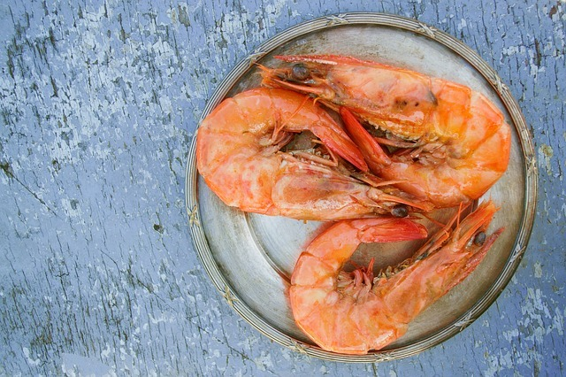 Top Things about shrimp for dogs
