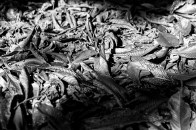 botanic garden, dried leaves