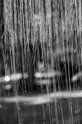 botanic garden, hanging roots
