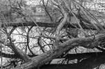 london reflections 004