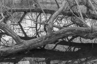 london reflections 006