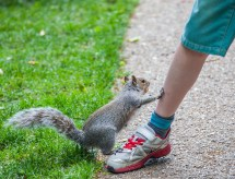 greenwich - squirrel and boy 002