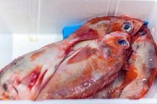 London Fish Market 001
