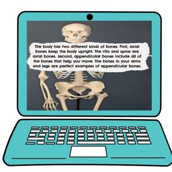 Skeletal System Digital worksheet pic