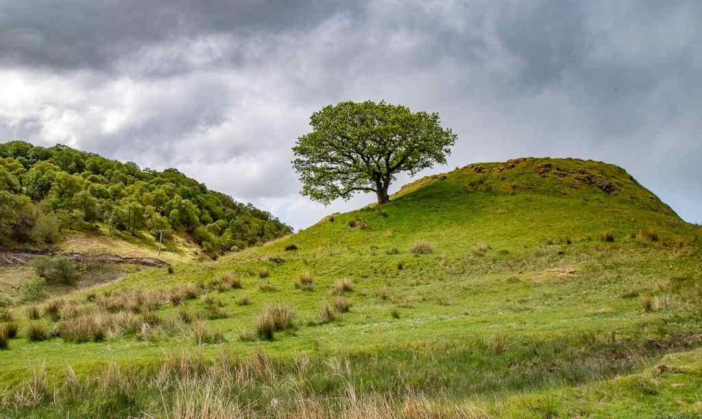 Fairy Tree in the Lonan Valley - Scotland