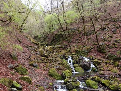 Kudonosawa stream