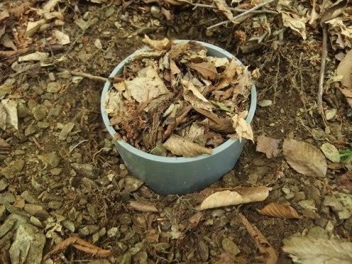 Soil core incubation