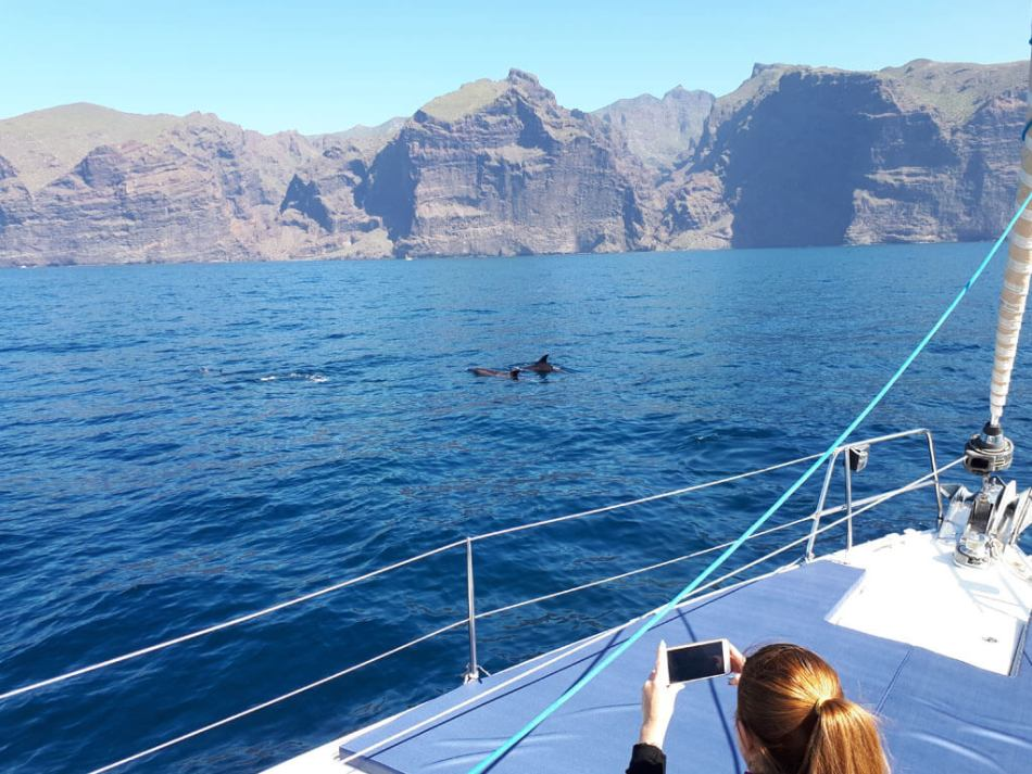 Whale Watching Los Gigantes