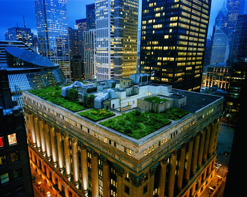 "Thousands of grasses and plants were used to create Chicago City Hall's award-winning rooftop. Photo credit: Diane Cook/National Geographic ""Women of Vision"" Exhibit"