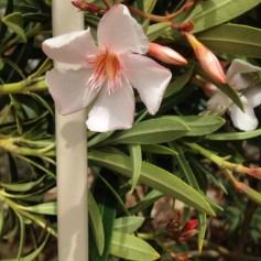 Desert blooms in Arizona